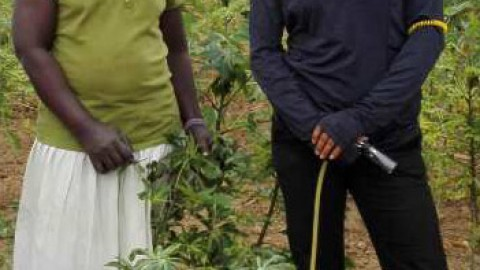 Auburn University post-doc tracks cassava virus history in East Africa